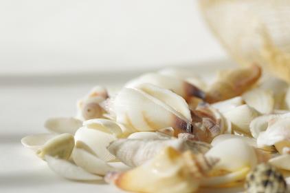 綺麗な貝殻のグラフィック素材