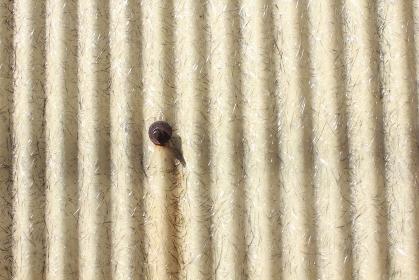 グラスウールの採光トタン