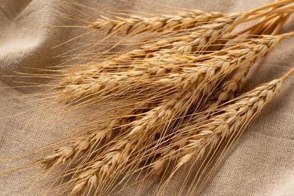 小麦 麦穂