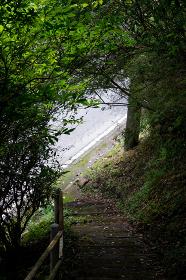 山道から見えるアスファルトの道