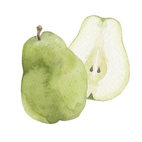 ラフランス 洋梨 秋 果物 フルーツ 水彩 イラスト