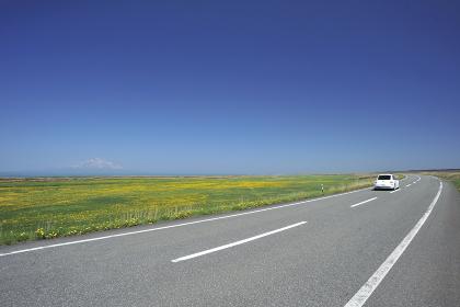 サロベツ原野の春