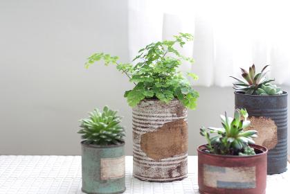 白いカーテン越しに飾ってるリメイク缶に入れた観葉植物