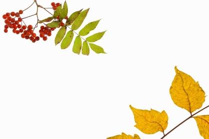 秋イメージ