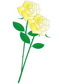 父の日の白バラを持つお父さん