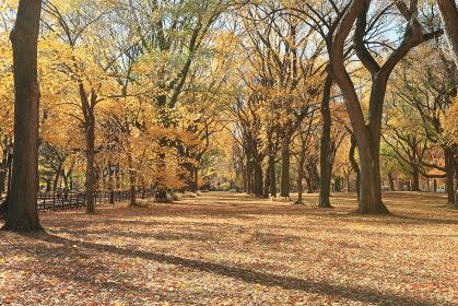 セントラルパーク モール 秋の装い ニューヨーク アメリカ合衆国