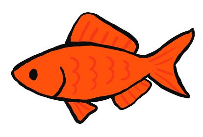 金魚すくいの金魚のイラスト