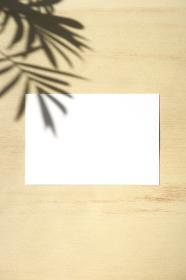 テーブルヤシの影と白いカード 8 縦位置