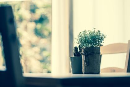 ダイニングテーブルに置かれた観葉植物