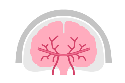 人間の脳(正面)簡略化した図解ベクターイラスト