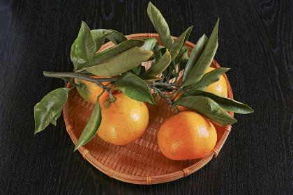 笊に入ったオレンジ色の蜜柑が生った緑の枝葉