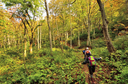 紅葉の樽口峠ハイキング