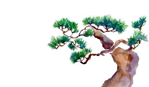 水彩で描いた松の木のイラスト