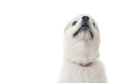 可愛い室内犬