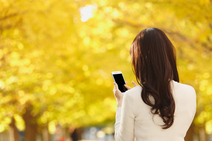 携帯でイチョウの紅葉を撮る日本人女性