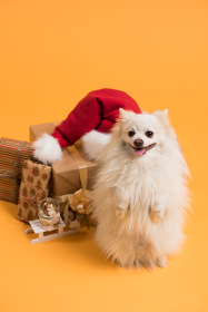 Dog with Christmas gift boxes and Santa Claus hat on yellow background