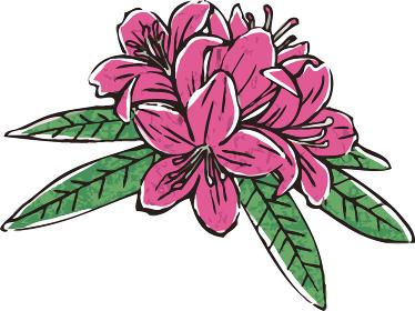 石楠花 しゃくなげ シャクナゲ