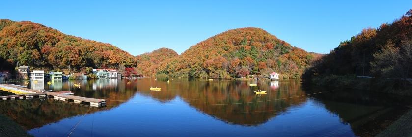 秋色に染まった山々と円良田湖 (埼玉県寄居町)(秋/紅葉)(パノラマ)