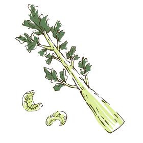 セロリ 野菜の手描きスケッチイラスト