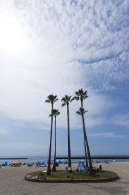須磨海水浴場の椰子の木