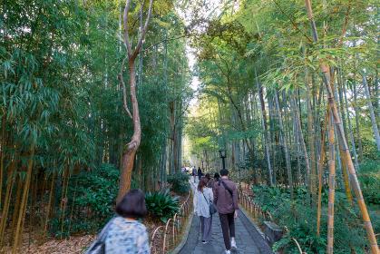 観光客で賑わう修善寺温泉竹林の小径