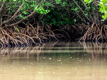 石垣島、マングローブの森と川面のリフレクション