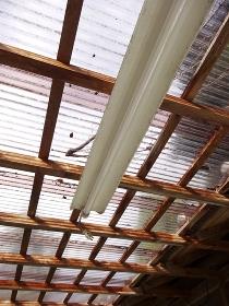 採光用のビニールトタンの屋根