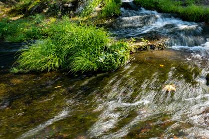 夏の小さな川の流れ