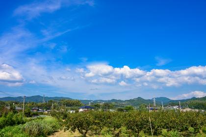 夏の青空のもと綺麗な水をくみ上げる古い水車(福岡県朝倉市)