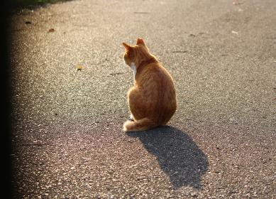 耳先カットされた野良猫の切ない後ろ姿