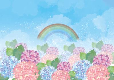 紫陽花:紫陽花 あじさい 花 カラフル 花びら 6月 梅雨 あじさい寺 虹