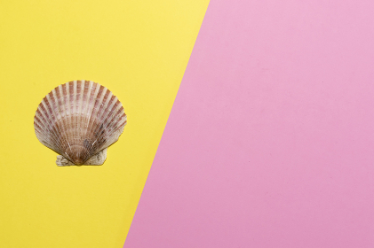Beautiful big scallop and mermaid shell on yellow and pink