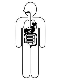 人体解剖図 身体の構造イラスト図解 線画 心臓 肺 肝臓 胃袋 小腸 大腸 膀胱 腎臓