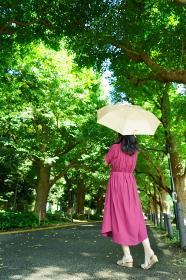 銀杏並木の木洩れ日の中、黄色い日傘をさした赤いワンピースの女性 右側