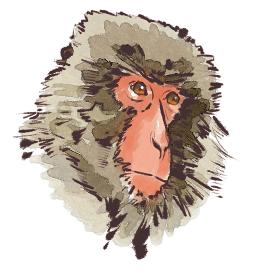 申 猿 さる  顔