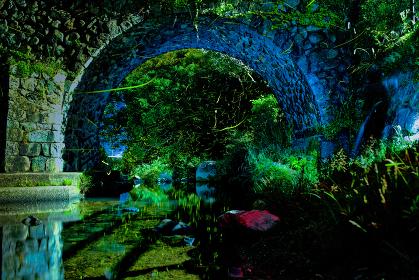 夏の夜渓流を飛び交うホタル
