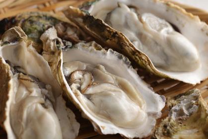 冬の海の味覚の殻付きの牡蠣