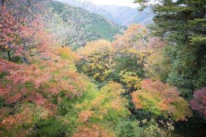高尾山登山道から見た景色