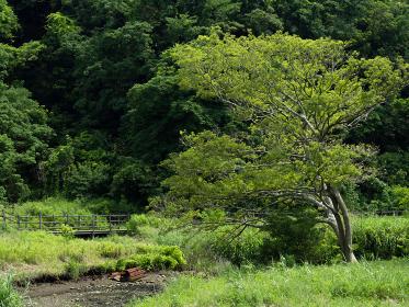 小網代の森の草原と木々 6月
