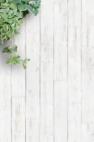 白い背景板と観葉植物・縦