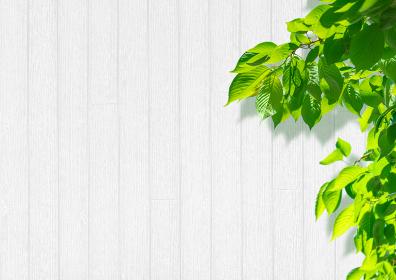 白い木目の壁と鮮やかな葉っぱの背景 2294