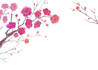 梅の花 背景 フレーム 水彩 イラスト