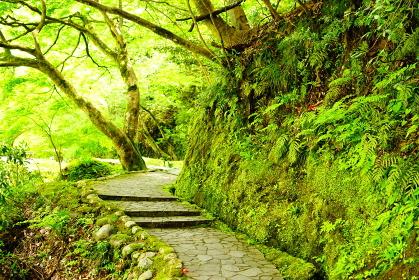 鶴仙渓の新緑