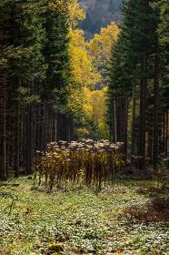 日本・北海道東部の国立公園、紅葉した林道