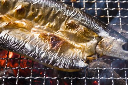 秋刀魚の干物