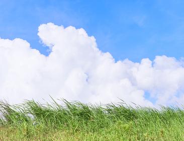 青空と入道雲と草