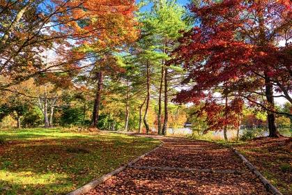 長野県・茅野市 秋の蓼科湖の紅葉の風景