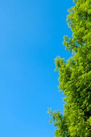 青空 空 雲 真夏の空 背景 背景素材 7月 コピースペース