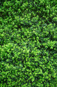 新緑・植栽・小さな葉っぱの集合
