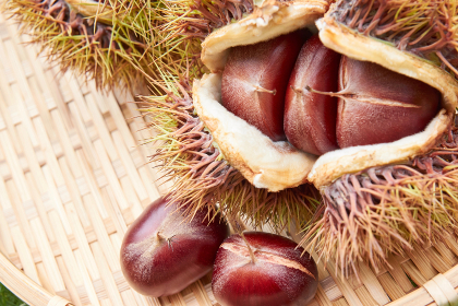 竹ザルの上の収穫した栗の実と毬栗
